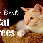 Best Cat Trees Reviewed 2018 | Cat Mania | For Cat Lovers