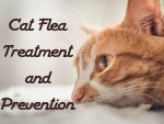 Cat Flea Treatment and Prevention