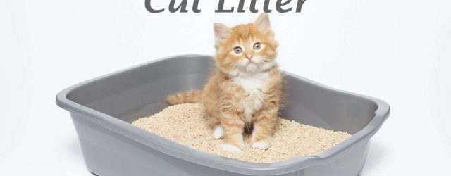 The Best Flushable Cat Litter