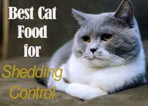 Best Cat Food for Shedding Control