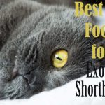 Best Cat Food for Exotic Shorthairs