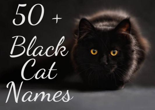 50 + Black Cat Names
