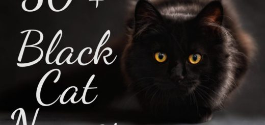 50 + Black Cat Names