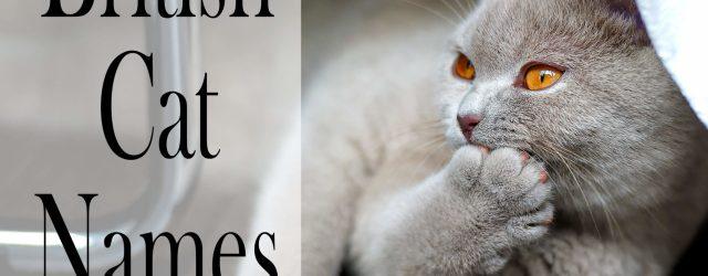 British Cat Names - 150 +Brilliant Names for your Cat