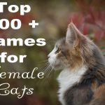 Top 200 + Names for Female Cats