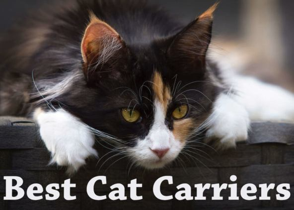 Best Cat Carriers