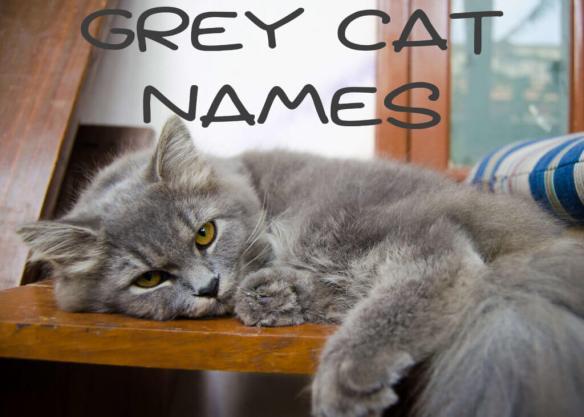 Grey Cat Names : 150 + Great Names