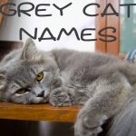 Grey Cat Names : 150 + Great Names
