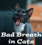 Bad Breath in Cats : Causes, Treatment and Prevention