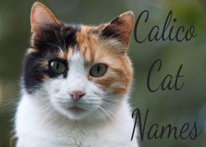 Calico Cat Names – 100 + Cool Names
