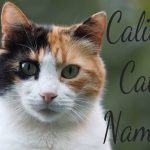 Calico Cat Names - 100 + Cool Names
