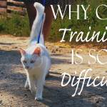 Why Cat Training is so Difficult