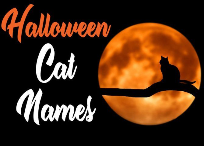 Halloween Cat Names : 50 + Names for Your Scaredy Cat