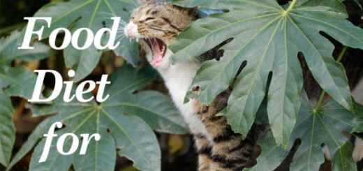 Raw Food Diet for Cats