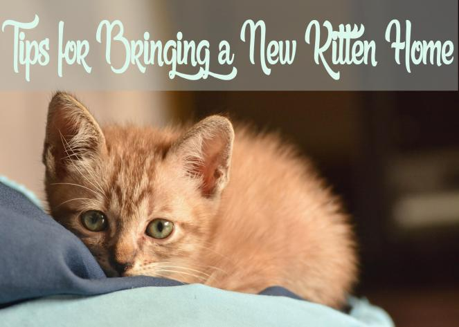 Tips for Bringing a New Kitten Home
