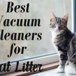 Best Vacuum Cleaners for Cat Litter