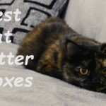 Best Cat Litter Boxes