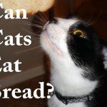 Can Cats EatBread?