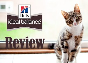 Hills Ideal Balance Cat Food Review