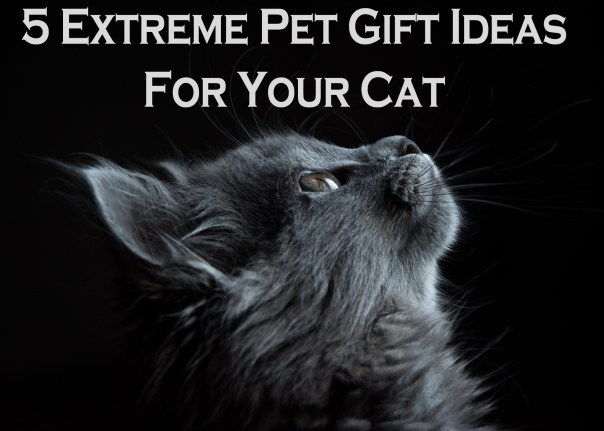 5 Extreme Pet Gift Ideas For Your Cat