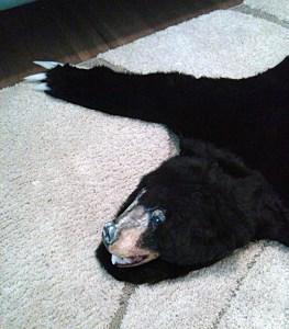 Bear7_sm