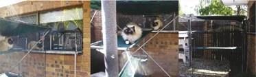Cat Care - Caboodles