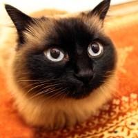 7 idées pour offrir un environnment sain à son chat