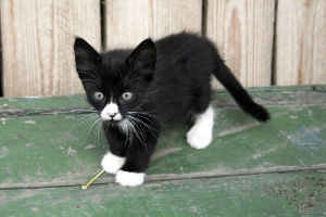 Black and White Cat Names_Kittens