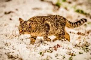 Cool Cat Names_Hunter