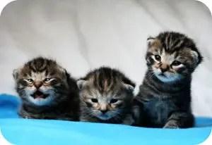 Cute Boy Cat Names