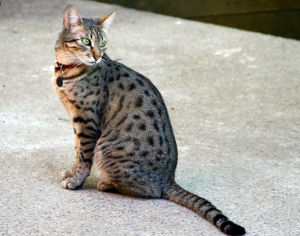 Egyptian Cat Names_Egyptian Names for Cats