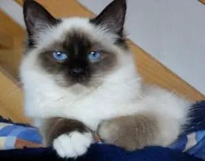 Most Popular Cat Names Australia