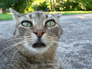 Hilarious-Funny-Cat-Names