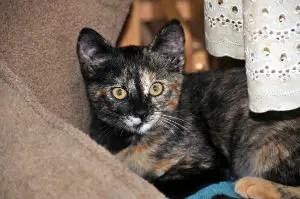 Tortoiseshell Cat Names_Cat Names City_Cute Cat Names