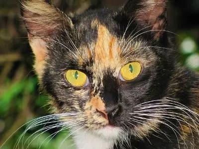 Unique Cat Names_Cat Names City_Black Orange