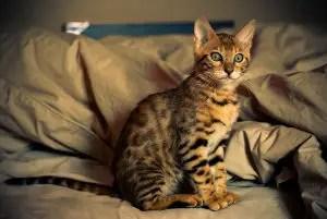 Unique Girl Cat Names_Cat Names City_Tabby