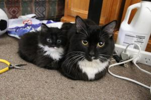 Female-Cat-Names_Names for Female Cats