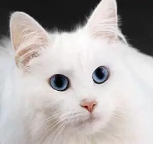 Girl Cat Names Female