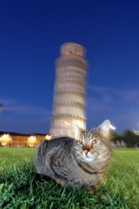 Italian-cat-names_cat-names-city_leaning-tower-of-_69d25f79aca049206c4bd19c7151a5f0