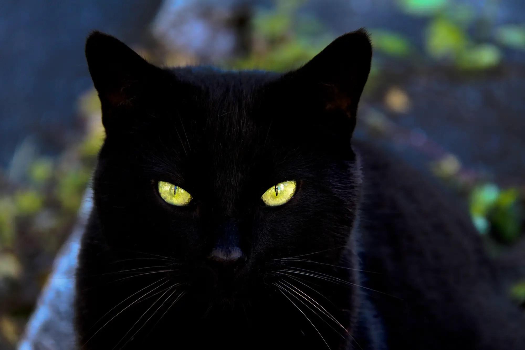 Female cat names z / Wabi coin and walmart videos