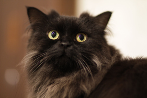 Unisex-names-for-cats