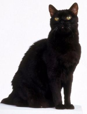 famous cat names black