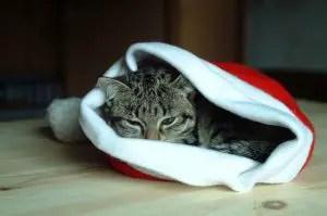 christmas cat names boy