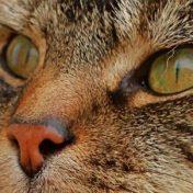 cropped-ernie-cat.jpg