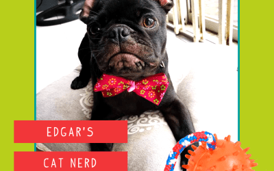 Edgar Allan Pug Review – Hedgehog Rope Toy