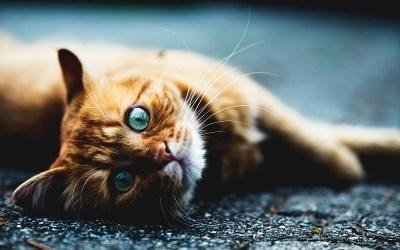 How to Read Cat Behaviour