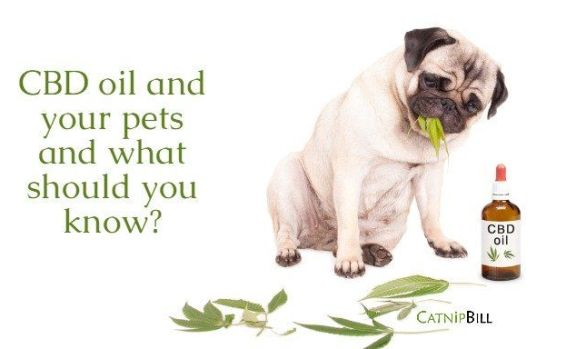 CBD oil and your pets and what should you know? | Catnip Bill | Harbor Hemp CBD Pet Products