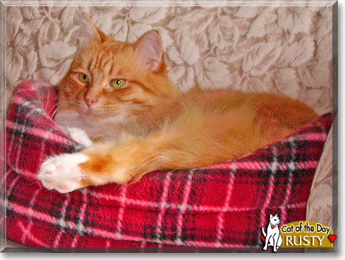 Rusty, the Cat of the Day