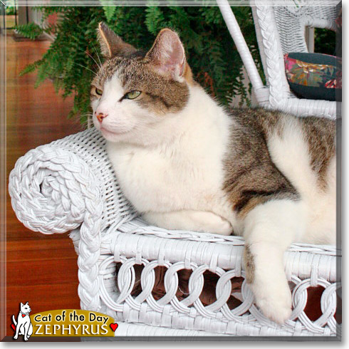 Zephyrus, the Cat of the Day