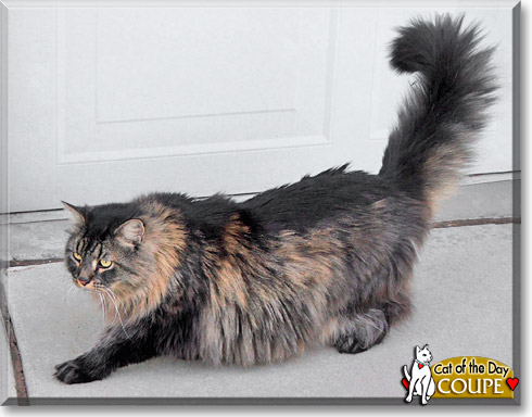 Coupe, the Cat of the Day